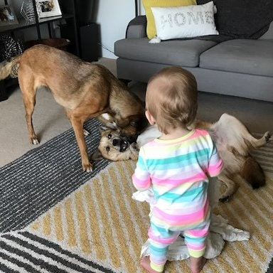 dog walker Carly M.