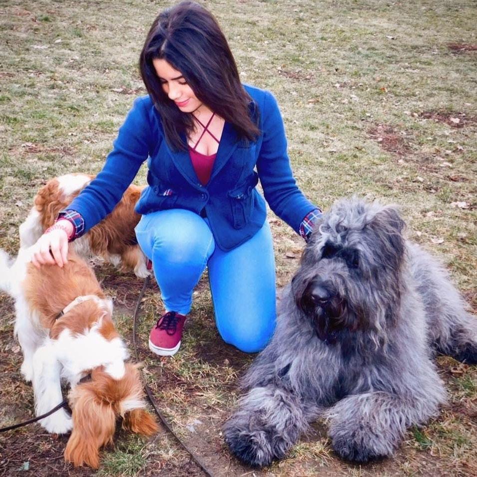 Ambar's dog day care