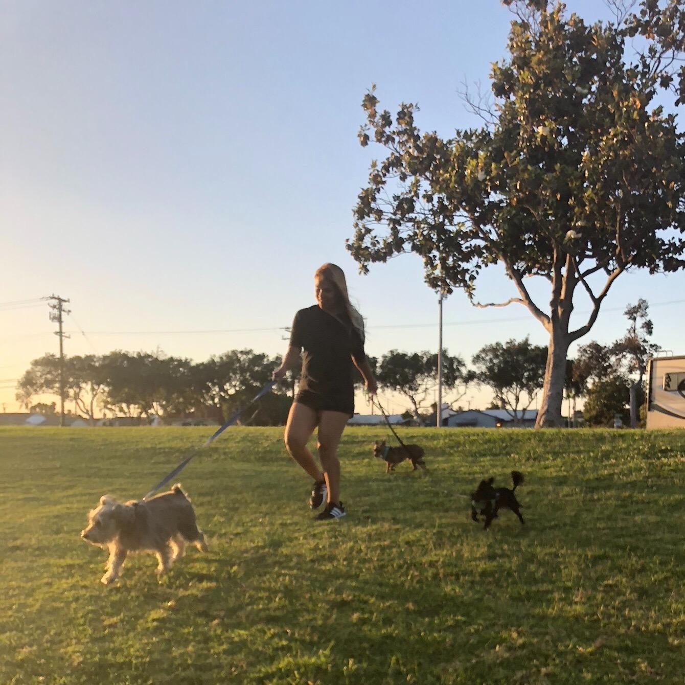 Aracely's dog day care