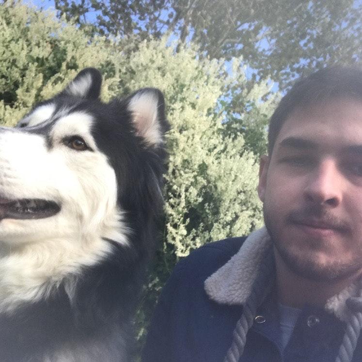 Zane's dog day care