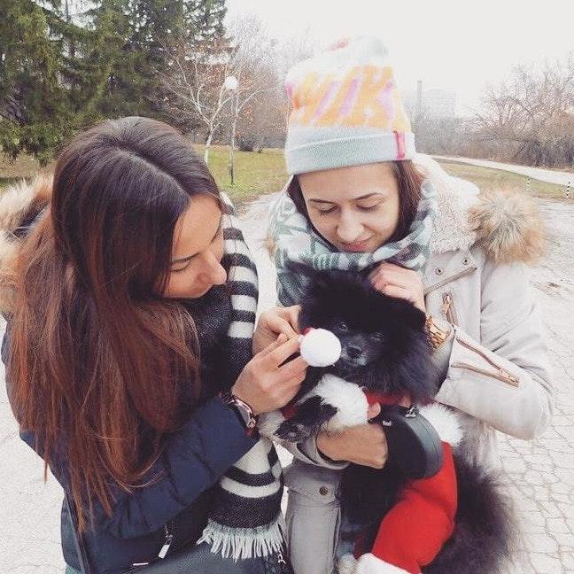 Ivelina's dog boarding