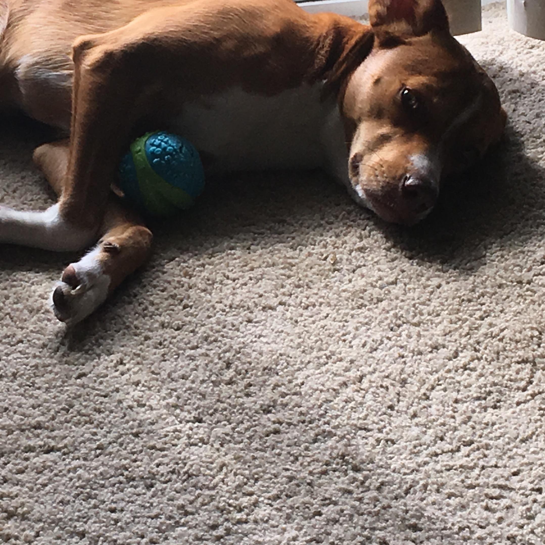 Shelby's dog boarding
