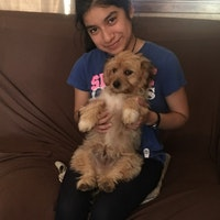 Elena's dog day care