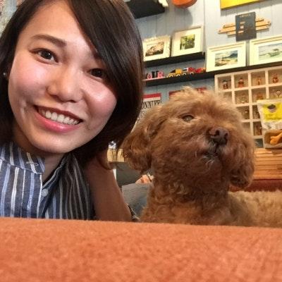 Teddy's dog boarding