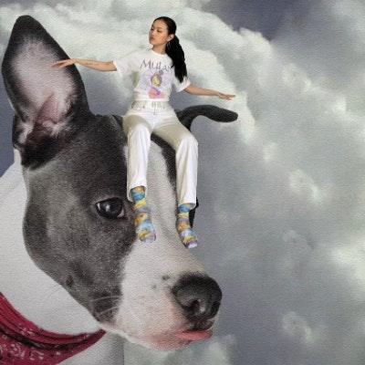 dog walker Qi