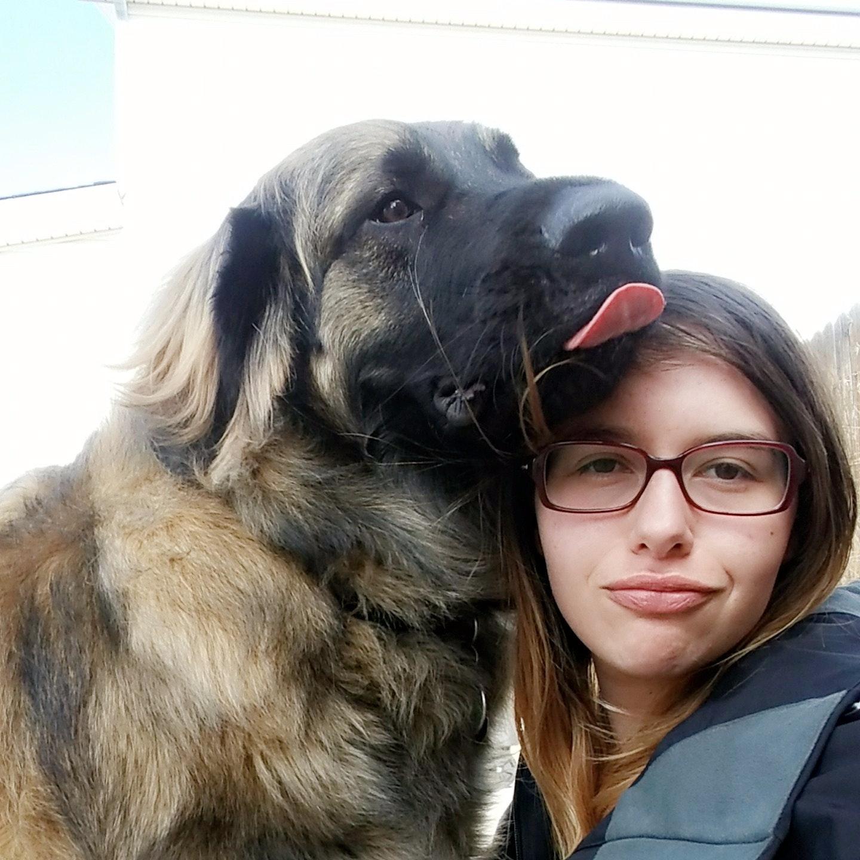Alissa's dog day care