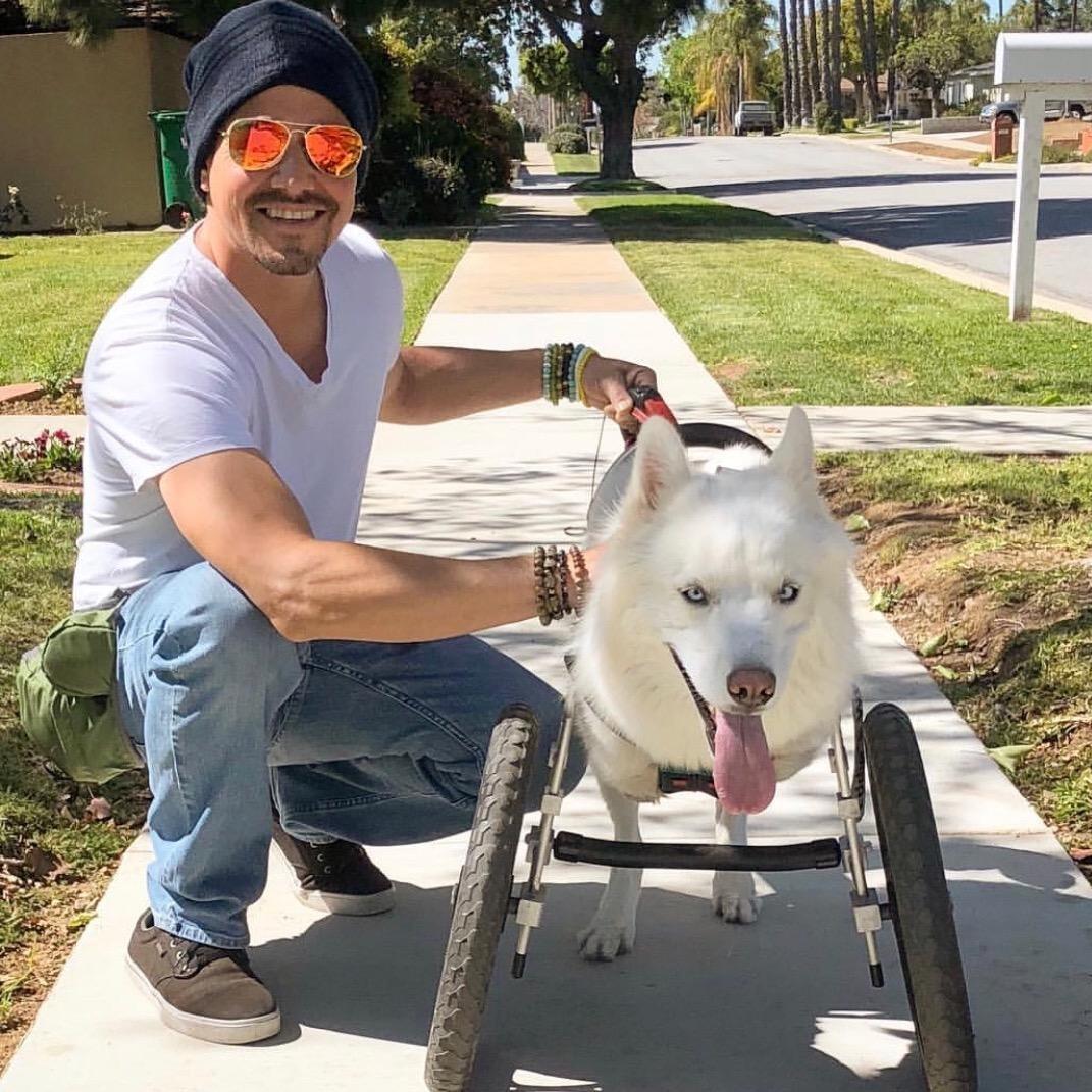 Jason's dog boarding