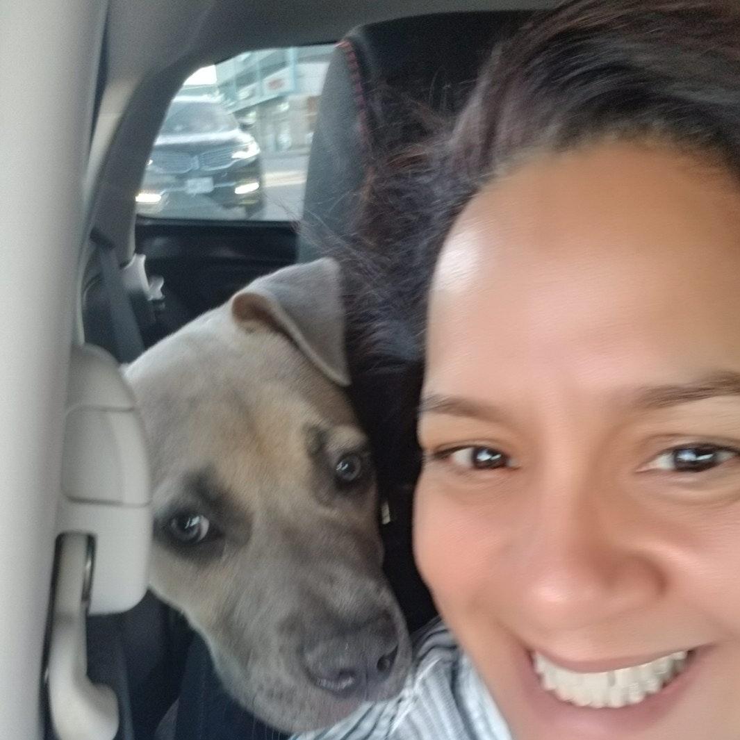 Wanda's dog day care