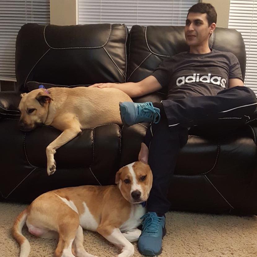 Rafic's dog day care