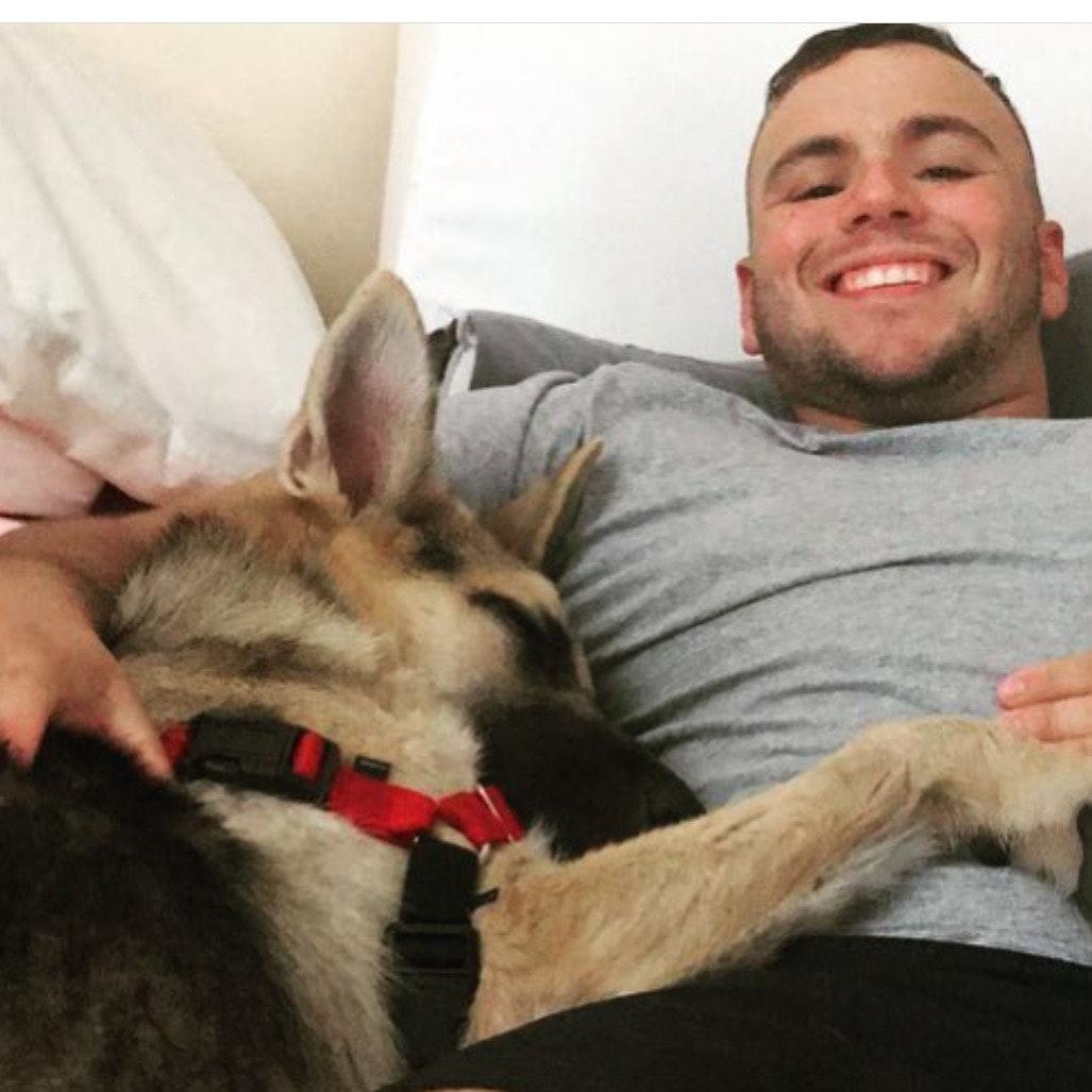 Brahim's dog day care
