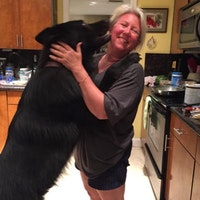 Gigi's dog day care