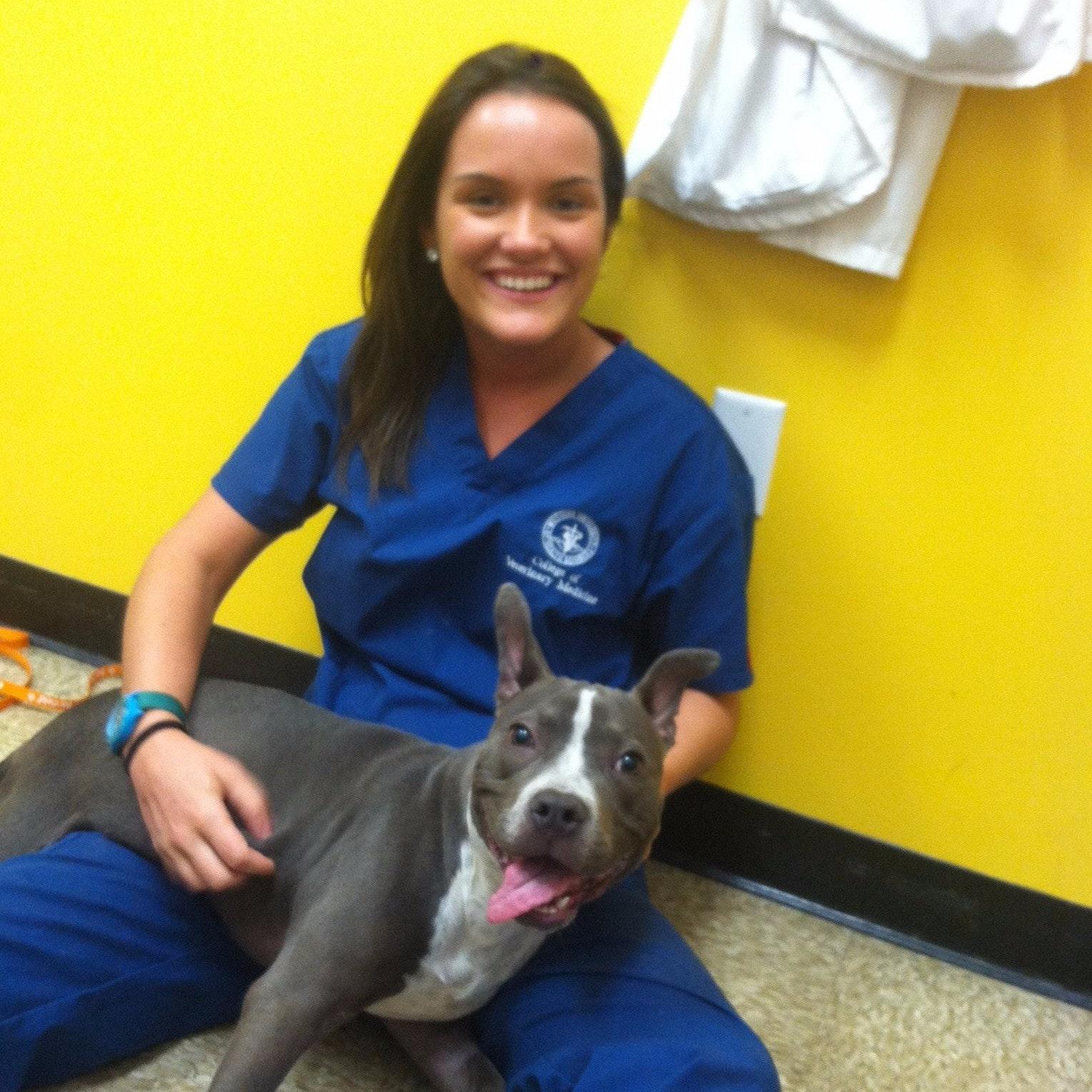 Alexandra's dog day care