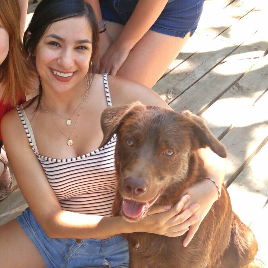 Misty & Veronica's dog day care