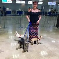 Edmonton's Best Dog Boarding Sitters & Dog Walkers | Rover com