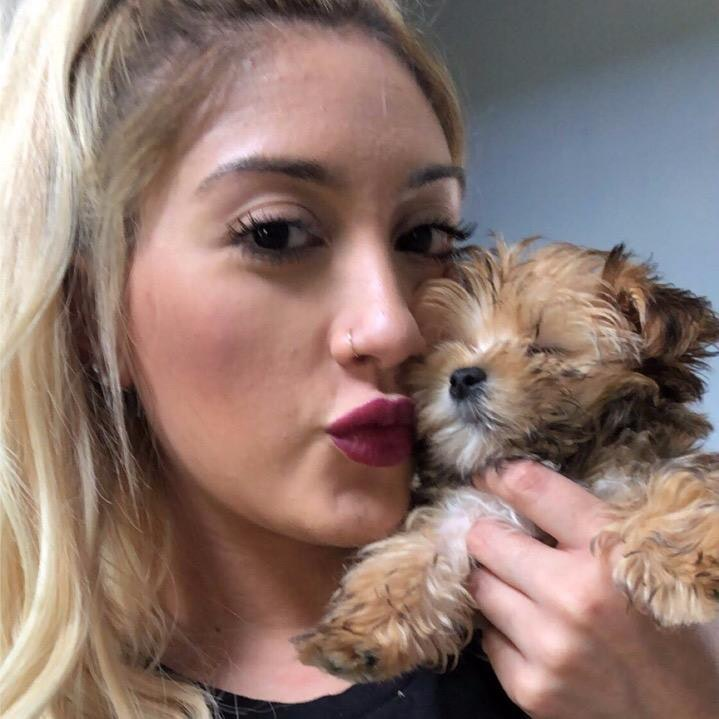 Daniele's dog day care