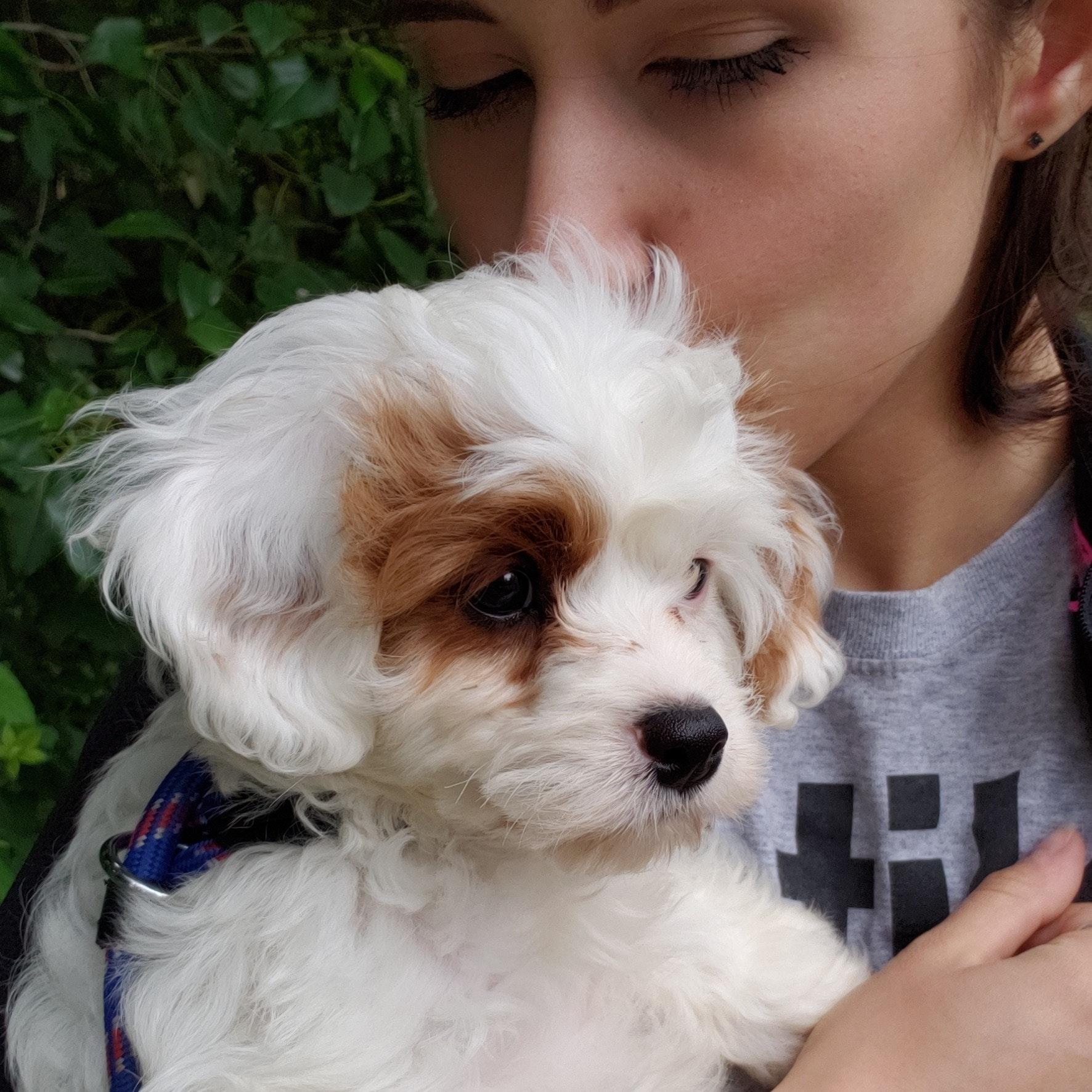 dog walker Lexi