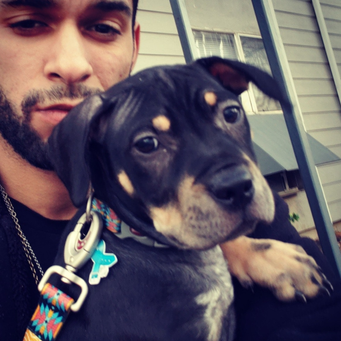 Manuel's dog day care