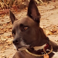Caressa 'Noah''s dog day care