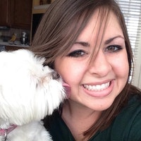 Nikki's dog boarding