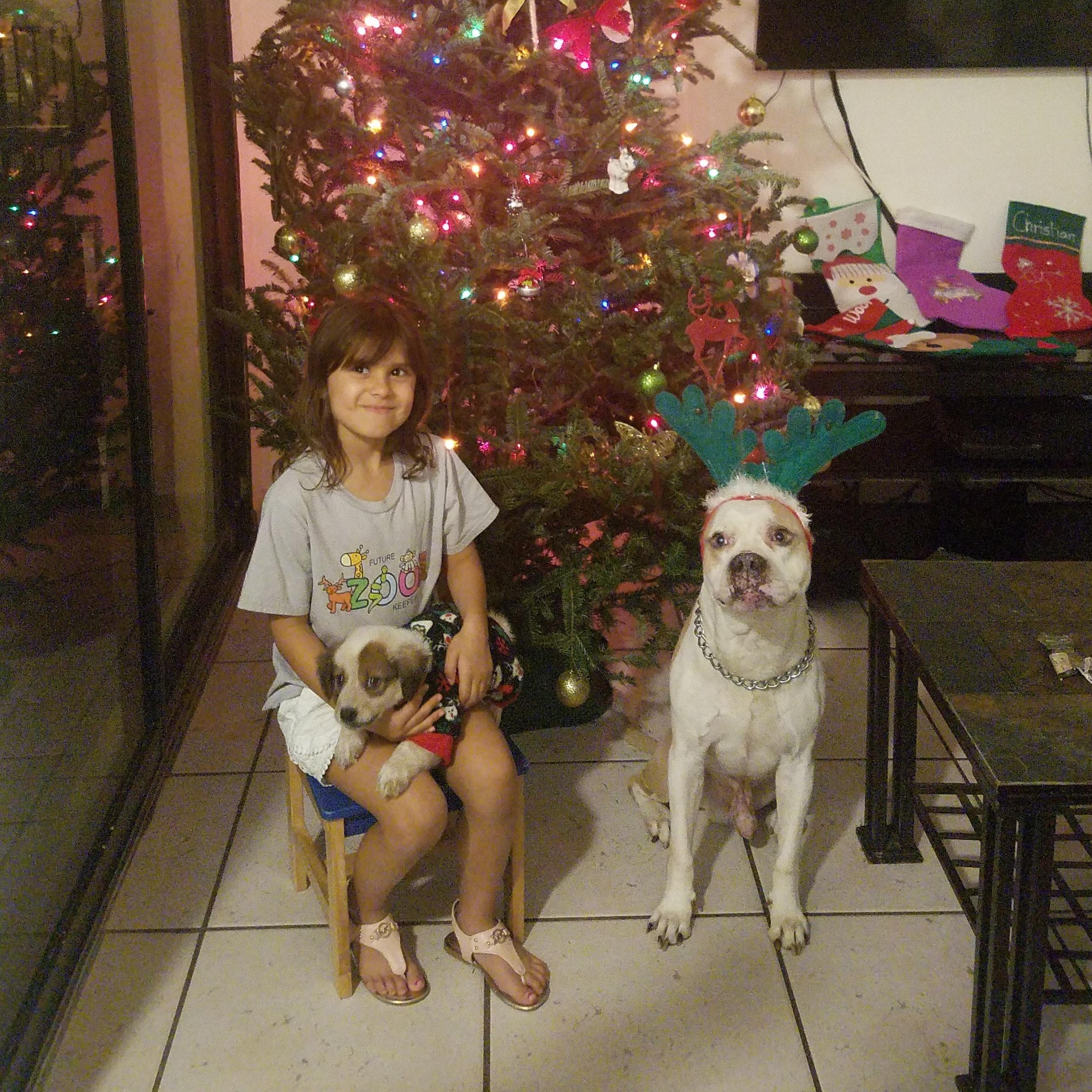 Rosemary's dog day care