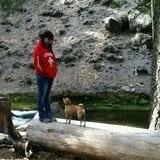 Kristyn's dog day care