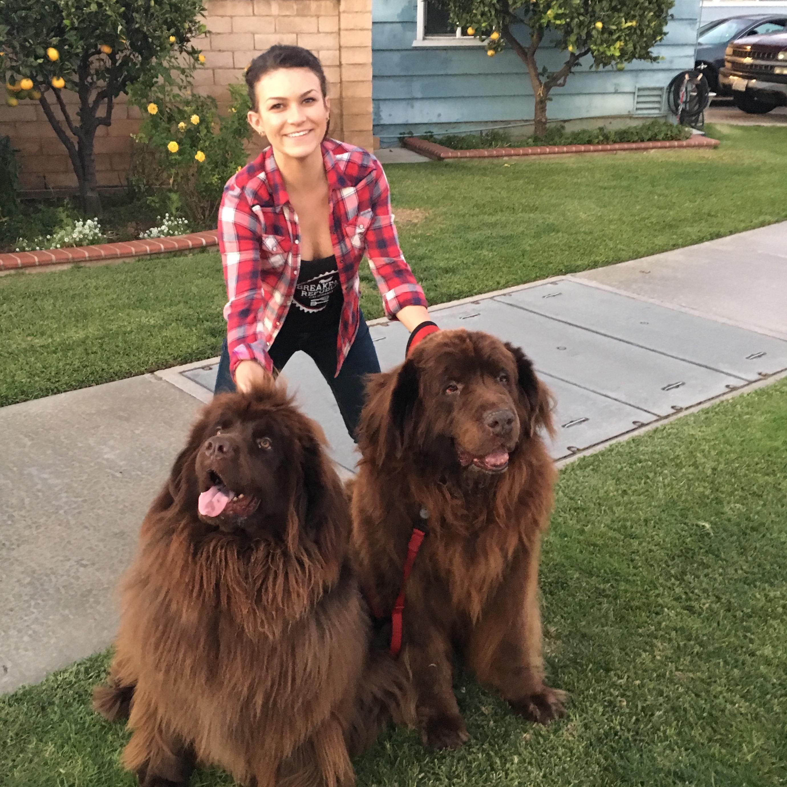 Liam & Anny's dog boarding