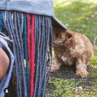Natasha's dog boarding