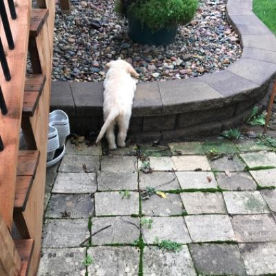 Cathy's dog boarding