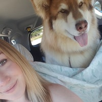 Kayleen's dog boarding