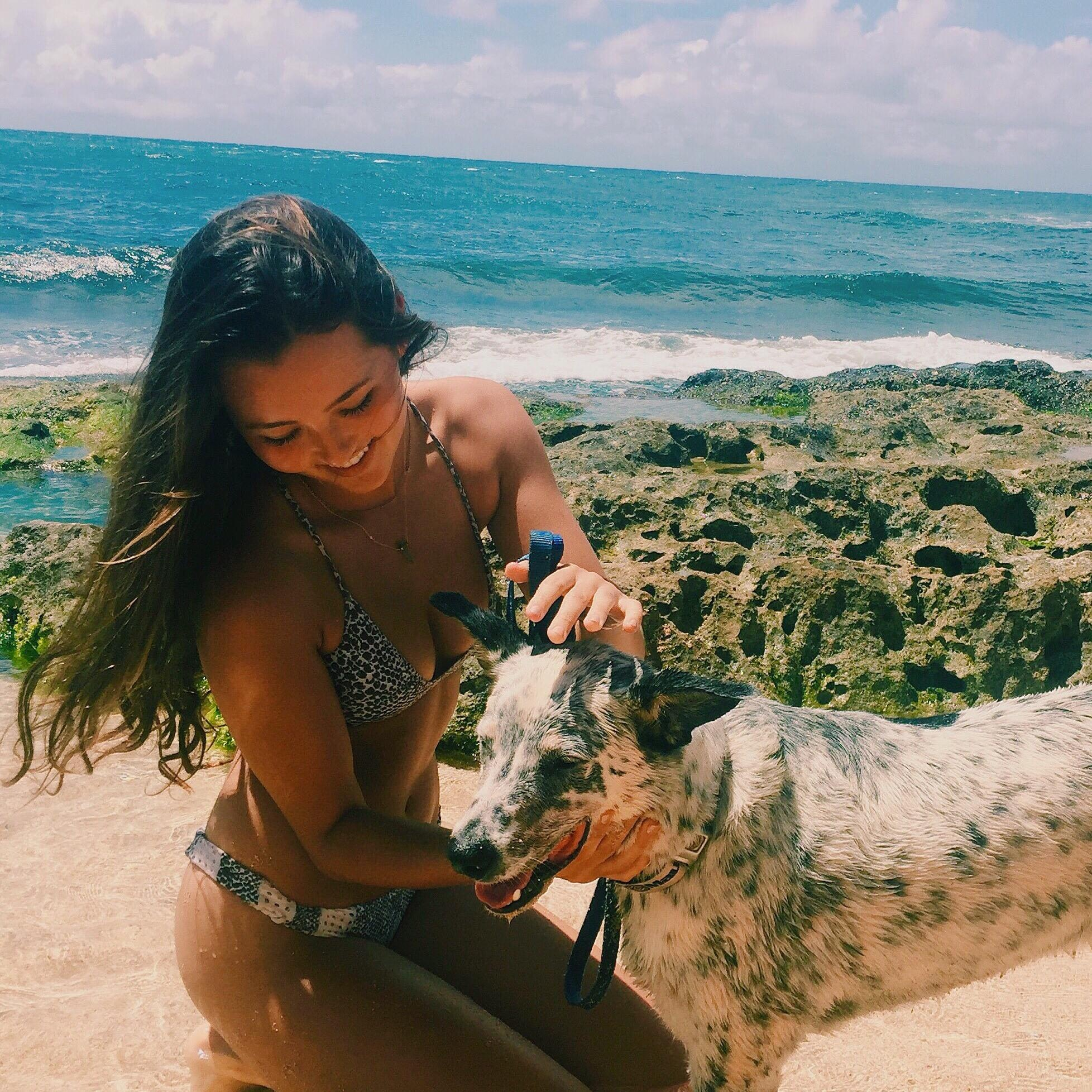 Hana's dog day care
