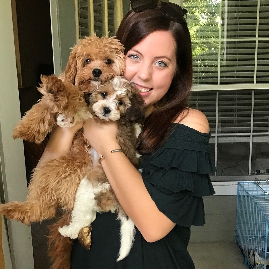 Olivia's dog day care