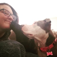 Britt's dog boarding