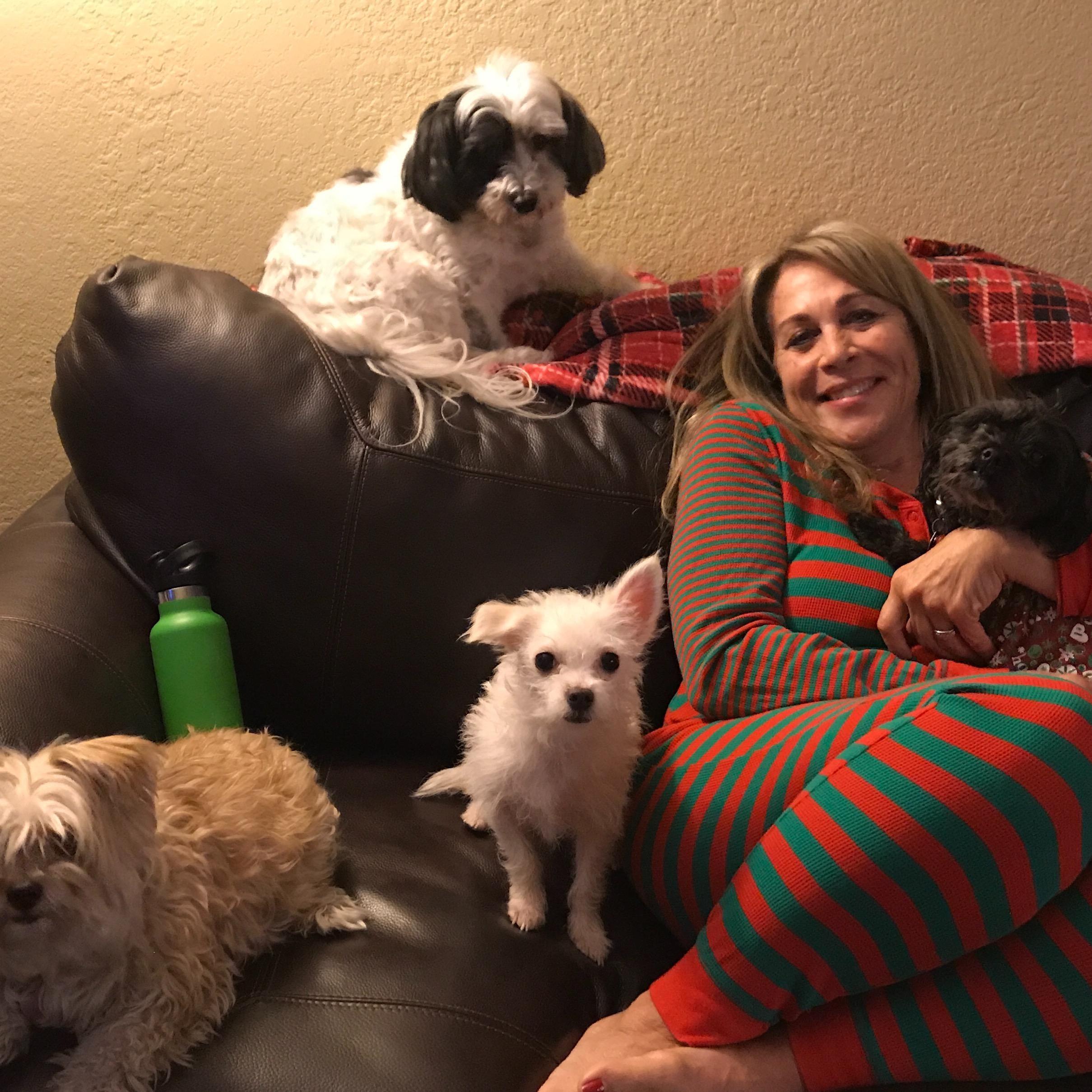 Teri's dog day care