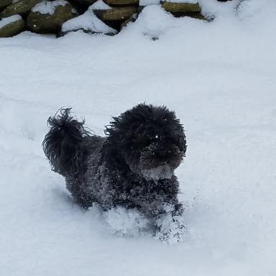 dog walker Connie