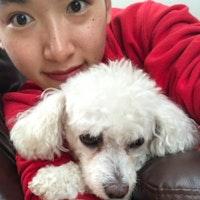 Grace's dog day care