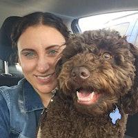 Dimitria & David's dog boarding