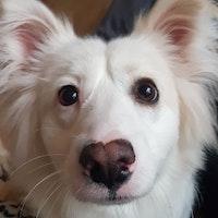 dog walker Gemma
