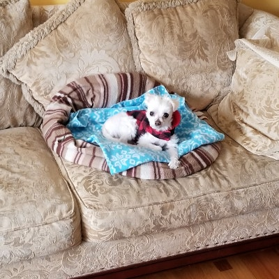 Kaivan's dog day care