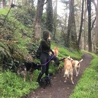 Simona's dog boarding