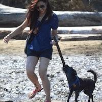 Marjorie's dog boarding