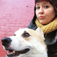Susan's dog boarding