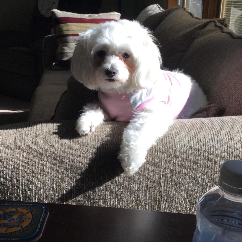Nanette's dog day care