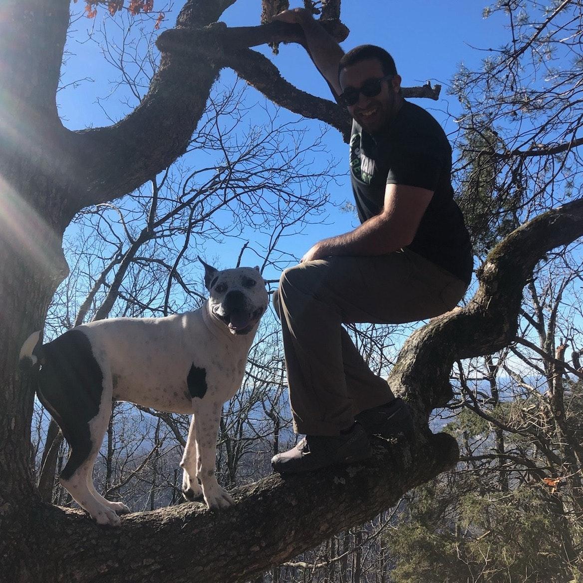 Dylan's dog boarding
