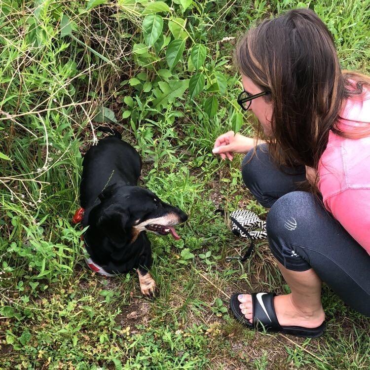 Roxanne's dog day care