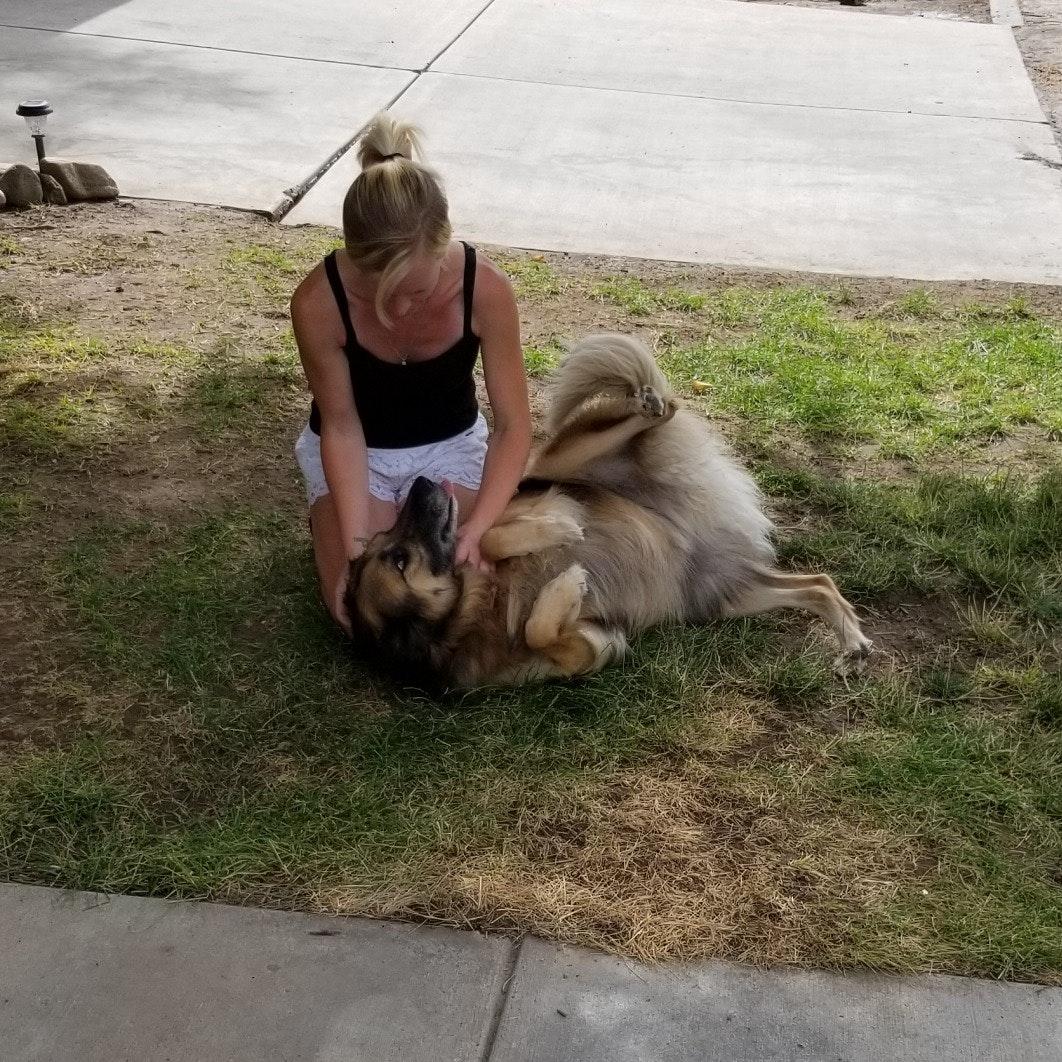Kailee's dog boarding
