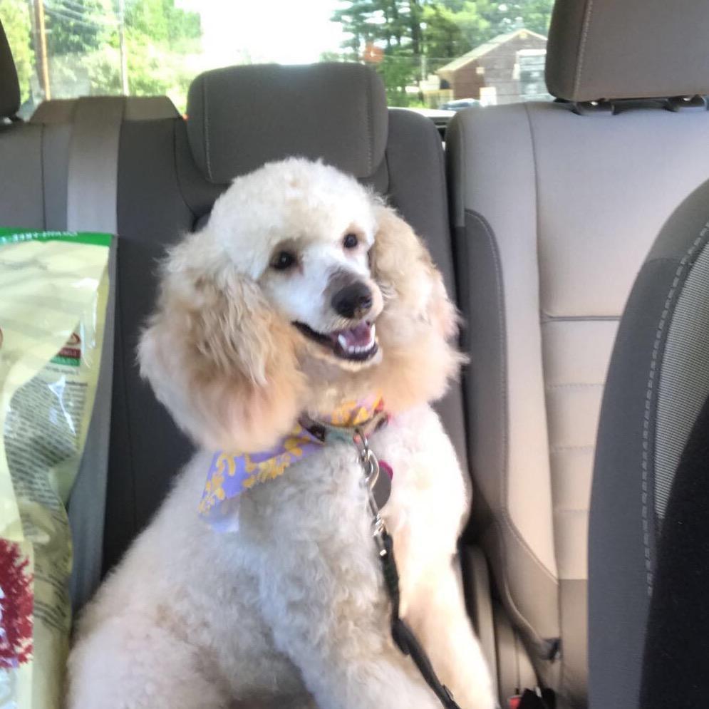 Abby's dog boarding