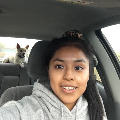 Dalia's dog day care