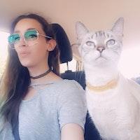 house sitter Cat