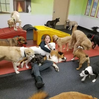 Heather's dog day care