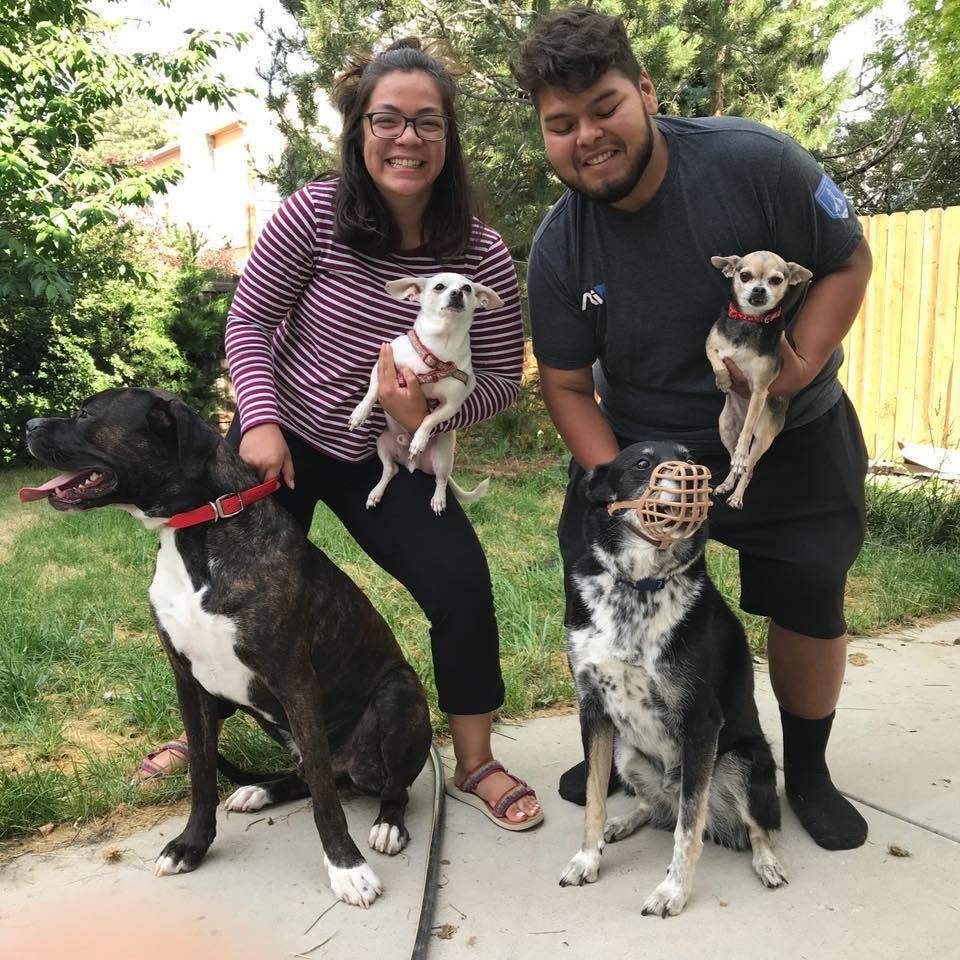 Oswaldo's dog day care